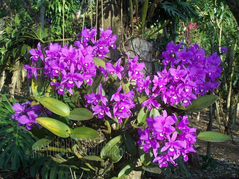 Costa Rica Orchid Tours